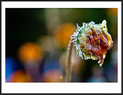 Flowerframe2